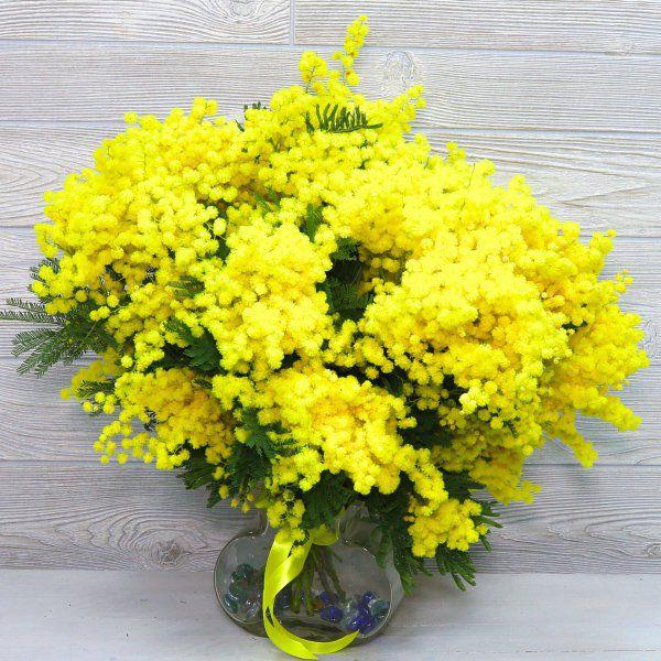 italjanskaja-mimoza-1-1.jpg